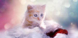 Los Gatos Más Tiernos
