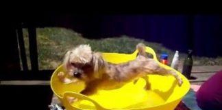 Perros Que No Se Quieren Bañar