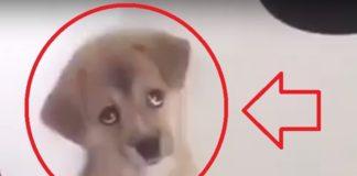 dueño riñe a su perro