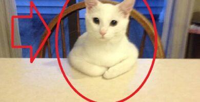 Videos De Gatos Actuando Como Humanos