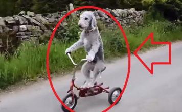 Animales Comportándose Cómo Humanos
