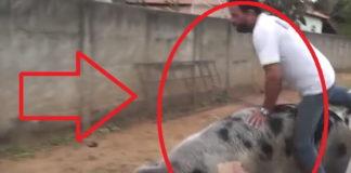 Hombre Montando Un Cerdo