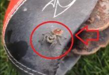 arañas que dan miedo